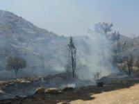 Mallıdağ'daki yangın: 20 hektar arazi kül oldu!