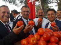 Geleneksel Çamlıbel Domates  Festivali dün akşam başladı