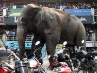 Hindistan'da 15 kişiyi öldüren fil vurulabilir