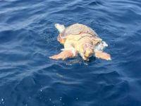 Girne sahillerinde Caretta karaya vurdu