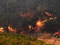 California'daki yangınlarda ölü sayısı 31'e çıktı