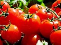 Rusya ve Türkiye domates konusunda prensipte anlaştı