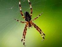 """""""Yılan ve örümcek korkusu evrim kökenli"""""""
