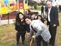 Girne Belediyesi'nin ağaçlandırma çalışmaları sürüyor