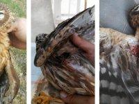 Av sezonunda yırtıcı kuş katliamı!