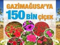 Gazimağusa Belediyesi, halka ücretsiz olarak çiçek dağıtıyor
