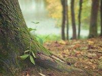 Dünyada doğal kaynakların tüketilme hızı artıyor