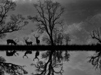 Kıbrıslı Türk fotoğraf sanatçısından büyük başarı