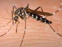 Yunanistan'da Batı Nil Virüsü, 11 kişinin ölümüne neden oldu