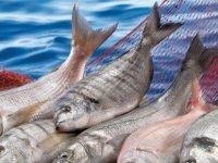 Alsancak ve Haspolat'ta kaçak et ve balık eti bulundu!