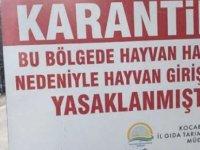 Türkiye'de şarbon krizi büyüyor