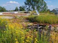 Yarı Kurak İklim Koşullarına Sahip Ülkemizde Yeşil Çatı Uygulamaları Üzerine Fizibilite Çalışması Yapıldı