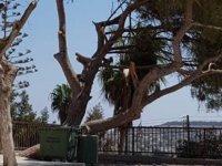Yeşil Barış Harekatı, ağaç kıyımına dikkat çekti