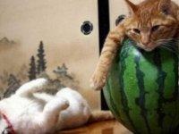 Patilerinde içecek kutusuyla 'yerlerde sürünen sarhoş kedi', sosyal medyada gündem oldu