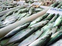 Denizler Kirli; Hangi Baliği Yiyelim?