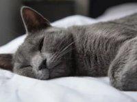 İngiltere'de bir ev kedisi kaldığı eve 30 paket kokain getirdi