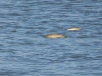 İçişleri Bakanlığı Kanlıköy Barajında balıkların yaşama tutunması için çalışma yaptı