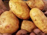 Güney Kıbrıs, Yunanistan, Ürdün ve Mısır'dan patates ithal etti