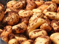 Patates cenneti KKTC'ye ithalat darbesi
