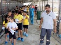 İskele Belediyesi'nden Hayvanları Koruma günü'nde 2 etkinlik