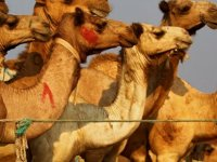 Suudi Arabistan'da develere estetik cerrahi ve botoks işlemleri cezalandırılmaya başlandı