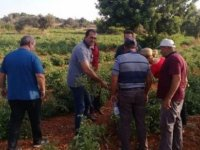 Tarım Dairesi eğitim çalışmalarına Yeşilırmak ile devam edecek