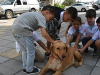 Beylerbeyi Anaokulu'nda hayvan sevgisi farkındalık etkinliği