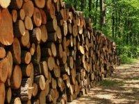 """Ormancılar Derneği: """"Odun satışları denetlenmeli"""""""