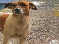 Napoli mafyası, uyuşturucu avcısı köpek Pocho'yu ölüme mahkum etti