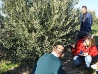 Çamlıbel'de zeytin yetiştiriciliği eğitimi