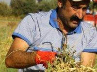 'Komünist Başkan' Tunceli'den adaylığını açıkladı