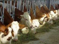 Hayvancılık Dairesi Güneşköy'de eğitim çalışması düzenliyor