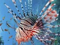 Kızıldeniz'den gelen 61 tür, Akdeniz'i işgal etti