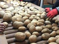 İthal patates yoğun ilgi gördü
