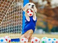 Kaleciyi gol yemekten sahaya giren köpek kurtardı (video)