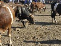 Devlet Üretme Çiftlikleri'nden kasaplık hayvan satışı