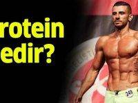 Protein nedir protein ne işe yarar?