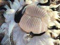 Avustralya'da onlarca kolu olan deniz yaratığı bulundu