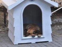 """""""Bu soğuk günlerde sokak hayvanlarına karşı daha duyarlı olalım"""""""
