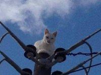 Sevimli kedinin kurtarılması için belediye ekipleri seferber oldu