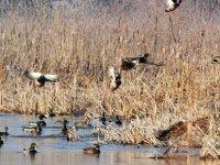 Ördek avı faciayla bitti: Üç kişi öldü