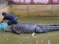 İzinsiz beslenen timsah, havuza düşen kişiyi parçalayarak öldürdü