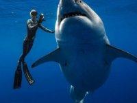 Dünyanın en büyük köpekbalığı görenleri şaşırttı! (video)