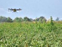 """""""Üreticiler tarlalarda ilaçlama yapabilir…ot toplanmamalı ve tüketilmemeli"""""""