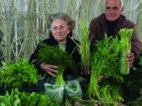 Tarım Dairesi'nden tahıl ekili alanlarda hastalık uyarısı…