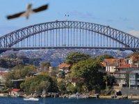 Avustralya'da 109 yılın en sıcak ayı ocak oldu