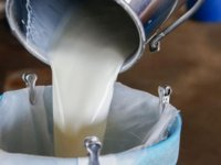 16 milyon 537 bin TL Süt Bedeli üreticilerin hesaplarına yatırıldı