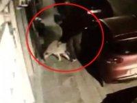 Köpeğe tecavüz etmeye çalışırken mahalle sakinlerine  yakalandı, temiz dayak yedi( video-haber)