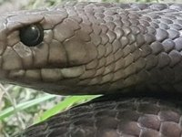 Eski sevgilinizin ismini bir yılana vermek ister misiniz?