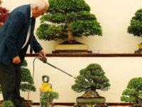 400 yıllık ağaçları çalınan Japon çiftten hırsızlara: Onları haftada bir sulayın